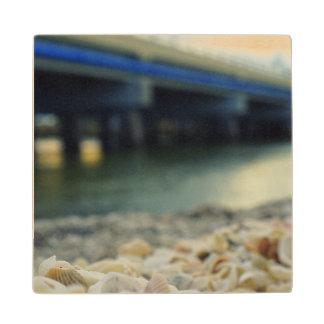 Seashells by the Seashore Wood Coaster