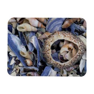 Seashells, Cape Town, Western Cape Iman Rectangular