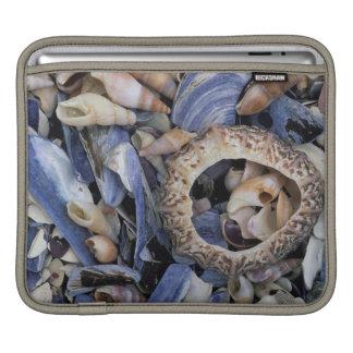 Seashells, Cape Town, Western Cape Sleeve For iPads