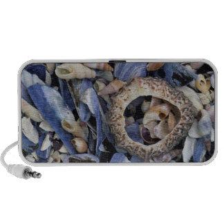Seashells, Cape Town, Western Cape Travel Speakers