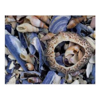 Seashells, Cape Town, Western Cape Postal