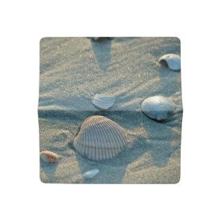 Seashells Checkbook Cover