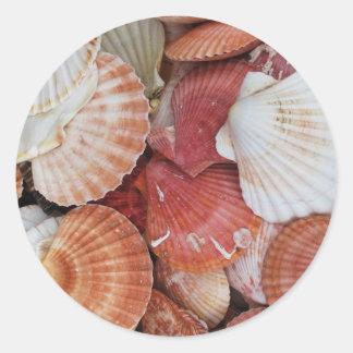 Seashells - close up sea shell photograph classic round sticker
