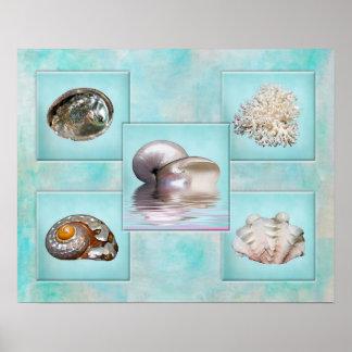 Seashells' Collage Poster - Aqua Background