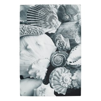 Seashells Collection Black n White Metal Print
