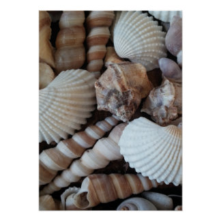 Seashells Collection, Poster, Nature, Summer Beach Poster