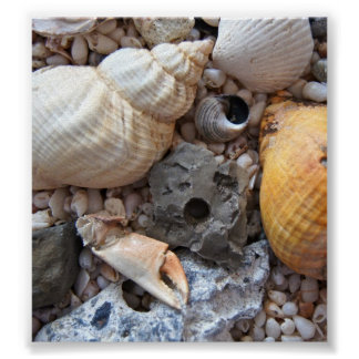 Seashells coloridos posters