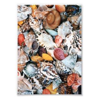 Seashells coloridos fotografía