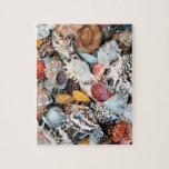 Seashells coloridos rompecabeza