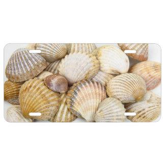 Seashells, conchas de berberecho, conchas de placa de matrícula