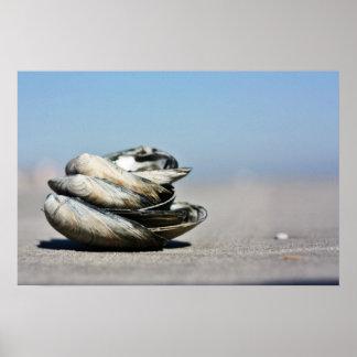 Seashells de la costa póster