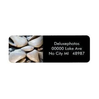 Seashells de la ilustración etiqueta de remite
