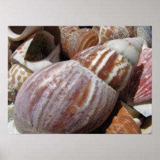 Seashells de Outer Banks, poster de Carolina del N