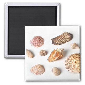 Seashells de Sanibel Imán De Frigorífico