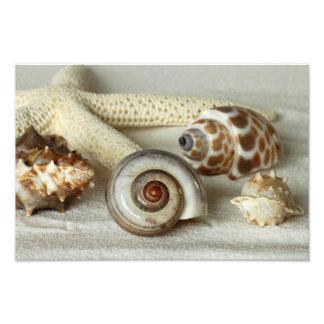 Seashells e impresión de la foto de la playa de la