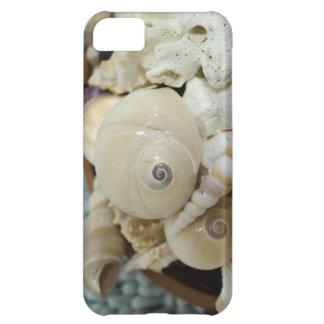 ¡Seashells elegantes