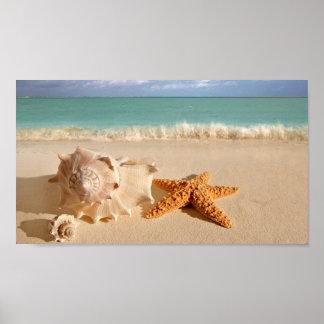 Seashells en el poster de la playa