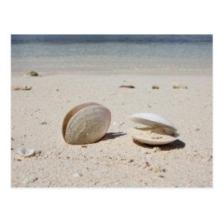Seashells en el primer del Caribe arenoso de la Postal
