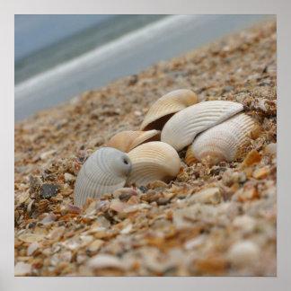 Seashells en la impresión de la fotografía de la b poster