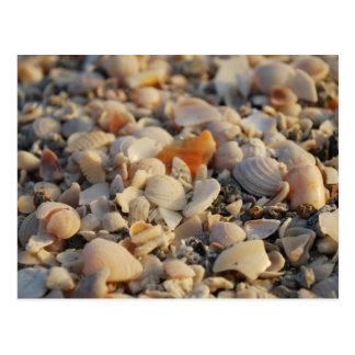 seashells en la playa de la Florida Tarjetas Postales