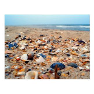 Seashells en la postal de la playa