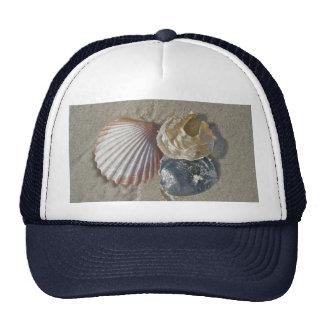 Seashells en los artículos de coordinación de la p gorra