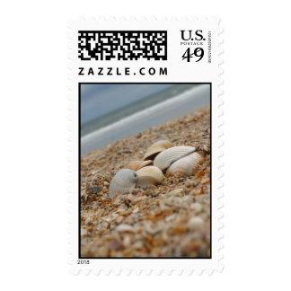 Seashells en los sellos de la fotografía de la pla