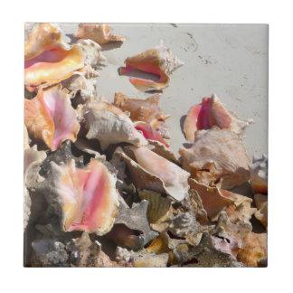 Seashells en los turcos de la playa el | y la foto azulejo cuadrado pequeño