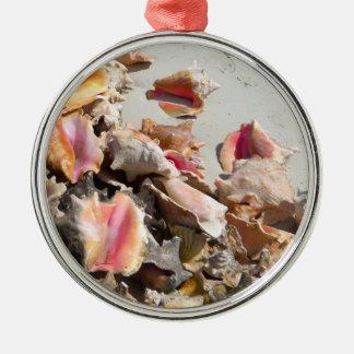 Seashells en los turcos de la playa el | y la foto ornamento para reyes magos