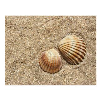Seashells en postal de la arena