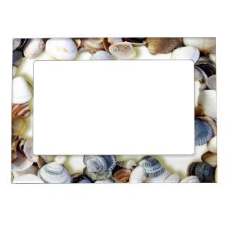 Seashells en un marco magnético de la playa marcos magnéticos