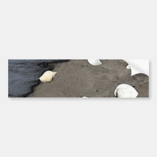 Seashells en una pegatina para el parachoques de l pegatina para auto