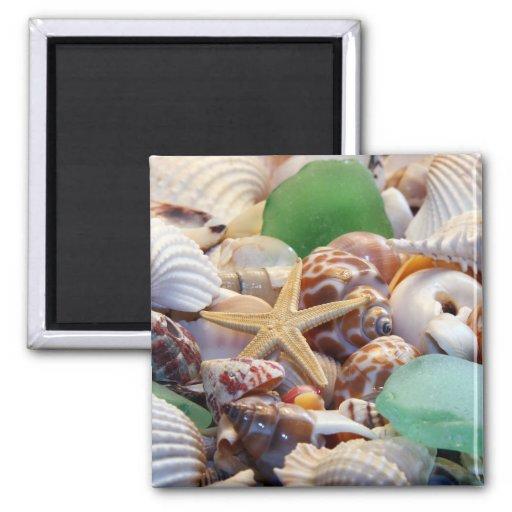 Seashells estrellas de mar y imán del vidrio de la