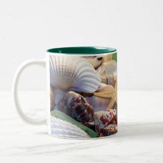 Seashells estrellas de mar y taza del vidrio de la