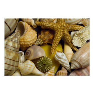Seashells Florida Poster