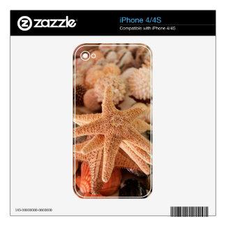 Seashells for sale Zihuatanejo, Mexico iPhone 4 Skin