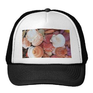 Seashells - fotografía ascendente cercana de la cá gorros bordados
