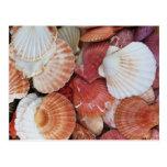 Seashells - fotografía ascendente cercana de la cá postales