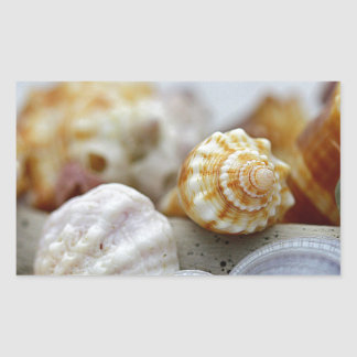 Seashells from the Seashore Rectangular Sticker