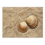 Seashells In Sand postcard