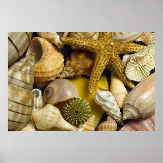 Seashells la Florida Impresiones