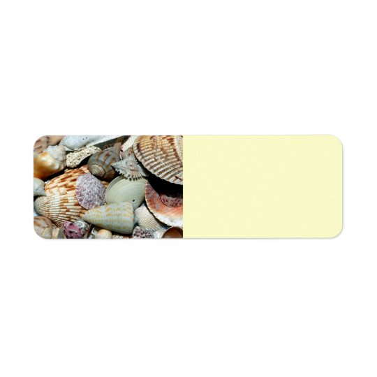 seashells label