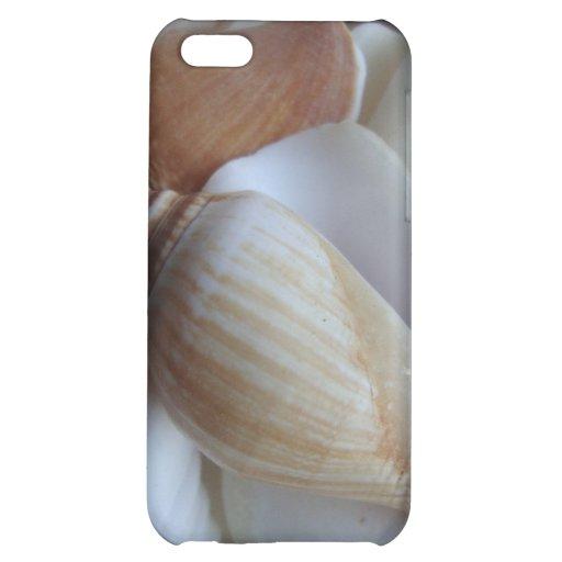 seashells marrones y blancos