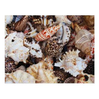 Seashells mezclados para el amante de la orilla de tarjetas postales