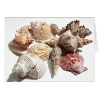 Seashells Notecard