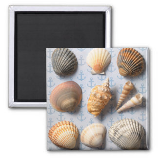 Seashells On Anchor Backdrop Magnet