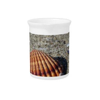 Seashells on sand. Summer beach background Drink Pitcher