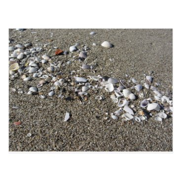 Beach Themed Seashells on sand. Summer beach background Postcard