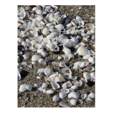 Beach Themed Seashells on sand. Summer beach background Postcard