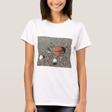 Beach Themed Seashells on sand Summer beach background Top view